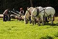 Débardage JEAN BAPTISTE RICARD mondial du cheval percheron 2011Cl J Weber10 (23787823800).jpg