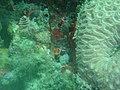 DSC00106 - recifes de coral - Naufrágio e recifes de coral no Nilo.jpg