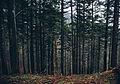 Dark-forest-combo-12.jpg