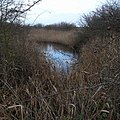Dark Pool in the Reedbeds, Barrow Haven - geograph.org.uk - 1621029.jpg