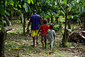 David Kebu Jnr walks through his cocoa farm with son, Snider and daughter Hadasha. (10691431963).jpg