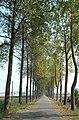 De Moeren - Moerkerkestraat - panoramio.jpg