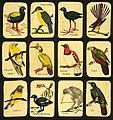Deck of playing cards featuring New Zealand native birds.jpg