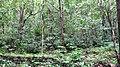Deep Forests @ Ponmudi Hills - panoramio (5).jpg