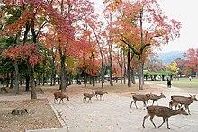 Nara, Nara