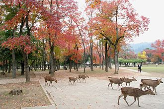 Nara, Nara - Deer roaming in Nara Park in autumn.