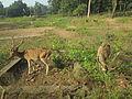 Deer Park at Kinnerasani Dam, Khammam, Telangana State 04.JPG