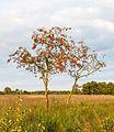 Delleboersterheide – Catspoele Natuurgebied van It Fryske Gea. Wandeling over de Delleboersterheide 14.jpg
