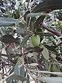 Delphi 065.jpg