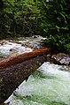 Denny Creek log - panoramio.jpg