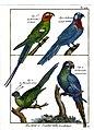 Diderot parrots.jpg