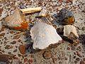 Dinosaur Provincial Park 10.jpg