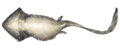 Diplocaulus Underside (Updated).png