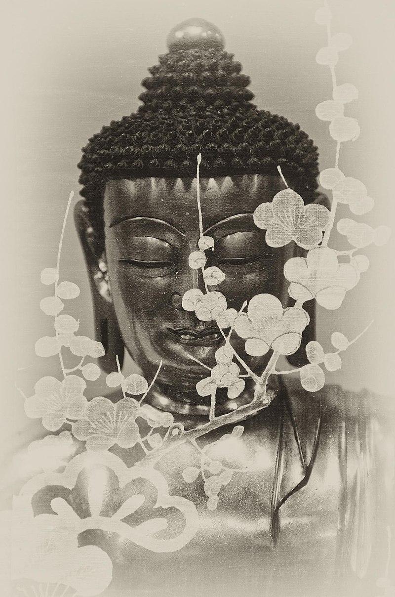 Divine Flower Blossom (3026020722).jpg