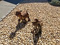 Dog and cat sculpture in Mountain View, California, July 2019.jpg