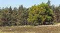 Door bomen omzoomd verruigd heideveld. Locatie, Kroondomein Het Loo 01.jpg