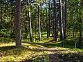 Druvciema mezs - panoramio (2).jpg