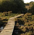 Duckboard walk, South Tawton Footpath 46 - geograph.org.uk - 996771.jpg