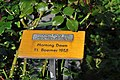Duftrosengarten Rapperswil - Morning Dawn KL Boerner 1955 2010-09-13 16-25-16.JPG