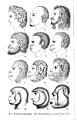 E. Haeckel, Naturliche schopfungsgeschichte Wellcome L0014863.jpg
