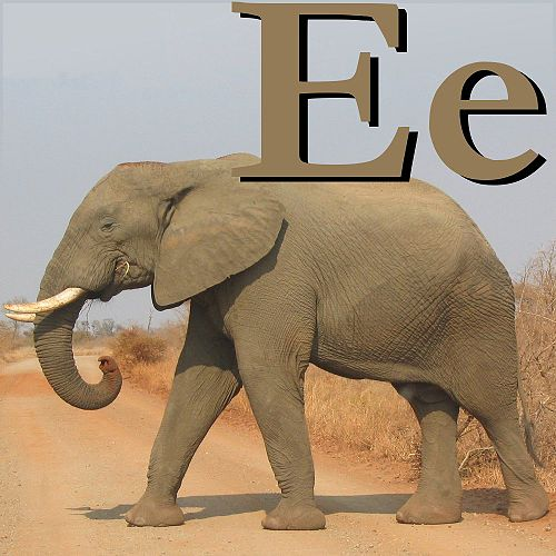 E is for Elephant.jpg