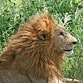 Eastern Serengeti 2012 06 01 3495 (7522709004).jpg