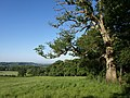 Edge of Upper Selves Wood - geograph.org.uk - 1342269.jpg