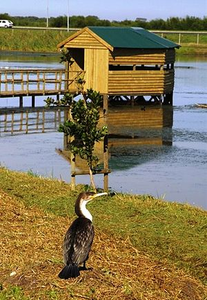Edith Stephens Wetland Park - Image: Edith Stephens Wetland Park Cape Town South Africa