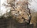 Eh..la Primavera. - panoramio.jpg
