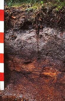 elsevier s dictionary of soil science canarache a munteanu i vintila i i