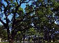 Elk Grove Park.jpg