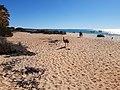 Emu running on the beach at Monkey Mia, July 2020 01.jpg