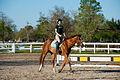 Equestrian Club (8578290446).jpg