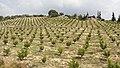 Esenbağlar, 33200 Mezitli-Mersin, Turkey - panoramio.jpg