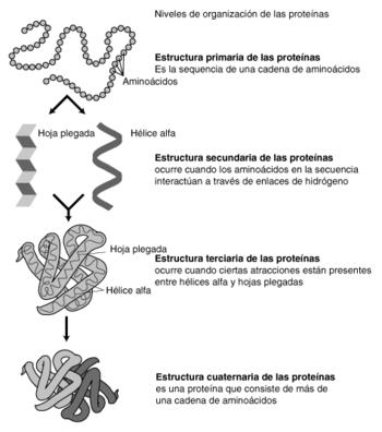 diferentes clases de aminoácidos