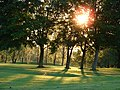 Evening Sun on Delapre Golf Course - geograph.org.uk - 443712.jpg
