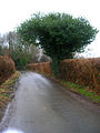 Evergreen on Under Road - geograph.org.uk - 121108.jpg