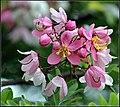 FLOWERS 4 (7422236494).jpg