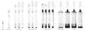 Falcon rocket family7 - 副本.png
