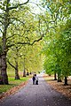 Fall In Hyde Park (89753209).jpeg