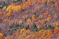 Fall Painting (6879530707).jpg