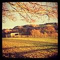 Farm - panoramio (31).jpg