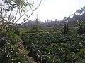 Farm in Ciwidey.jpg
