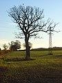 Farmland, Dunsden - geograph.org.uk - 1059255.jpg