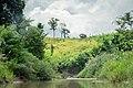 Farmland in Sangu Reserve Forest 1.jpg