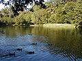 Fasanerie - Teich mit Enten.jpg