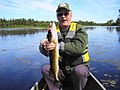 Fat Little Chain Pickerel (8376370388).jpg