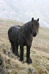 Symbolique du Cheval dans CHEVAL 160px-Fell_pony