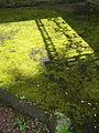 Fence shadow. (2610377482).jpg