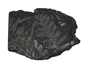 Miners (poem) - Fern fossil in coal